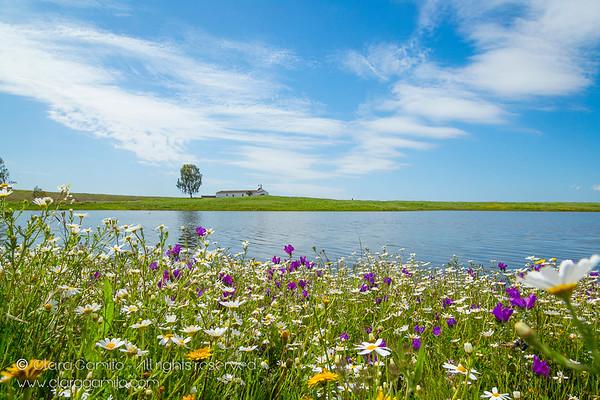 Spring in Alqueva