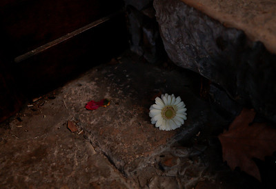 Lonely flower on the floor, Saint-Sauveur Cathedral, Aix-en-Provence, France, French Riviera