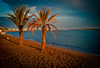 Palm Trees at sunset on the French Riviera, France