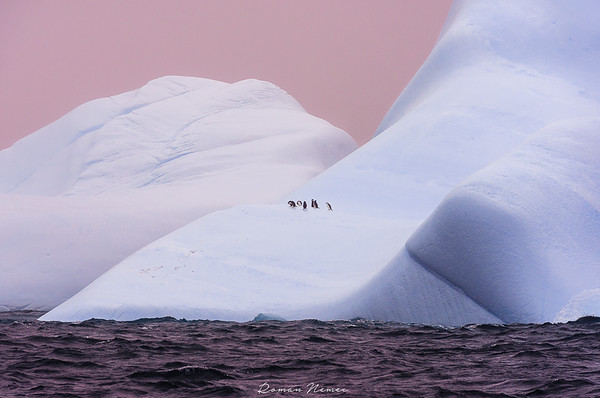 From the Fernande`s logbook: The journey is many times the Destination! A pack of pinguins is relaxing on a huge iceberg! Somewhere in the Southern Shetland Islands #polarexpedition #sailboat #veleiro #wild #adventure #sailingexpedition #fernande #bombazafernande #iceberg #ice # Antarctica #Antartida #pinguins