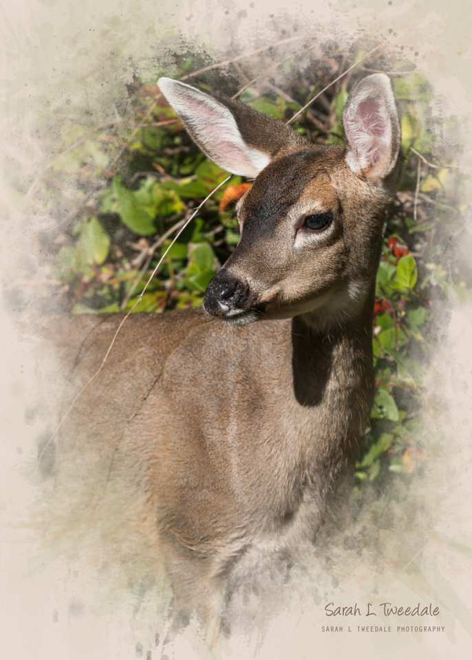 deer portrait photoart2