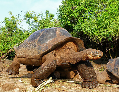 Wildlife/Galapagos