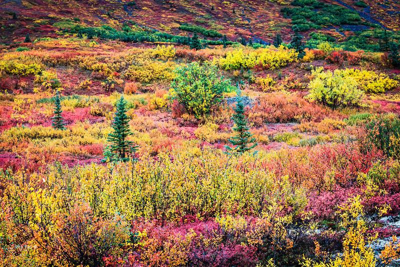 20130911 Alaska Central -0118