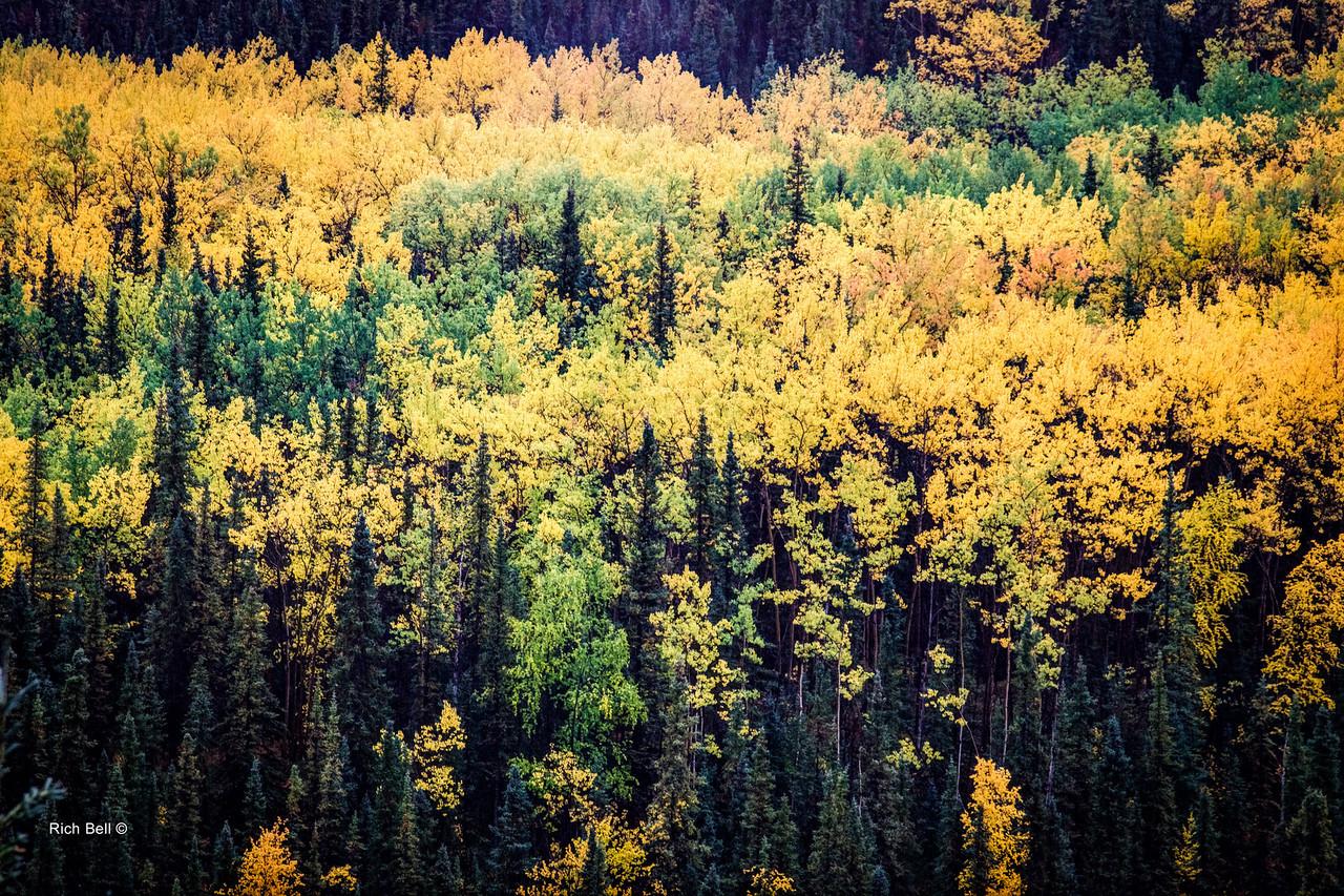 20130911 Alaska Central -0047_8_9Natural