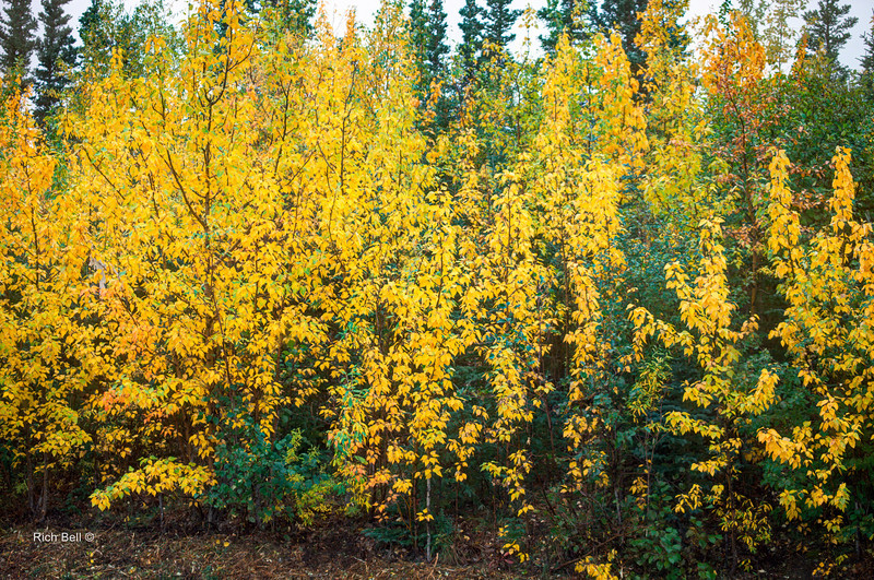 20130911 Alaska Central -0005_6_7_fused