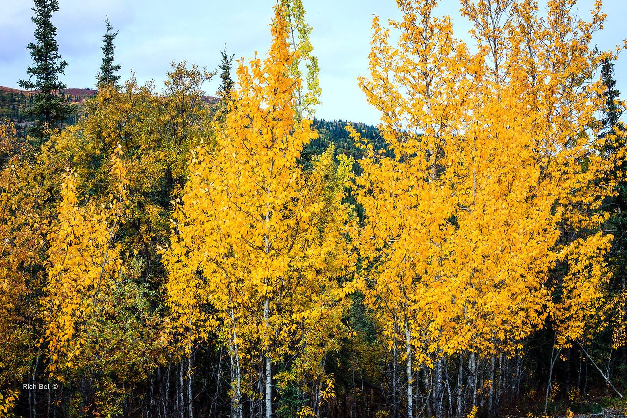 20130912 Alaska Central -0361