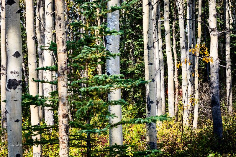 20130912 Alaska Central -0259