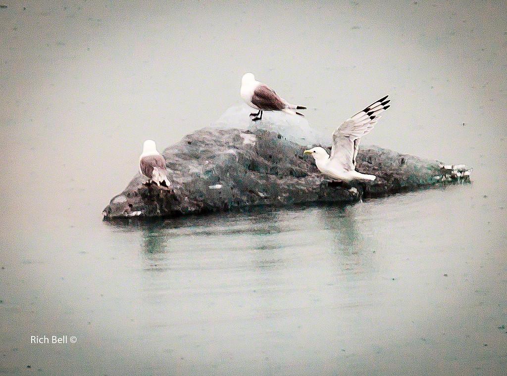 20130907- Glacier Bay 0022