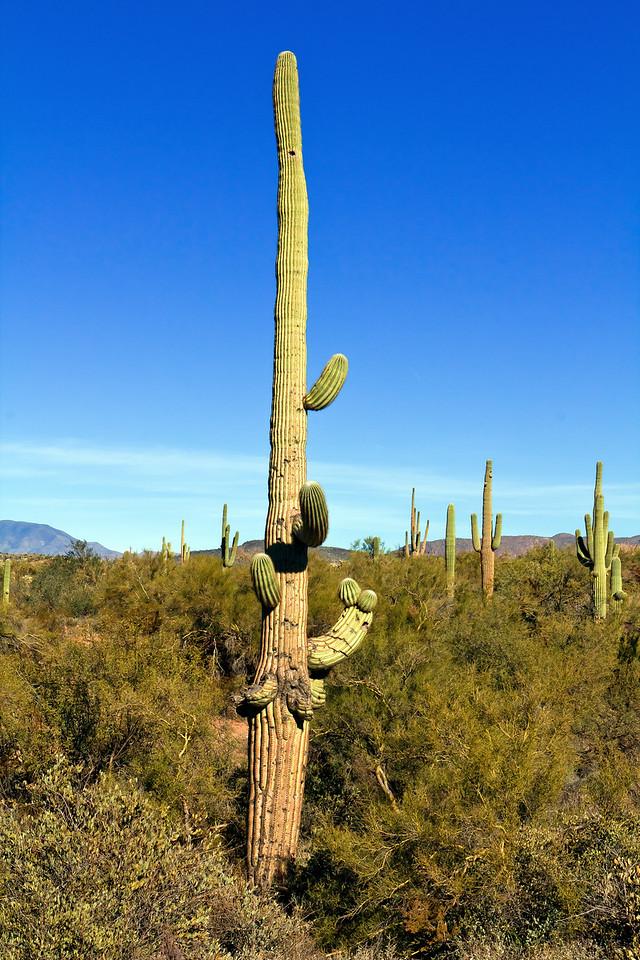 20110113_Arizona_0123