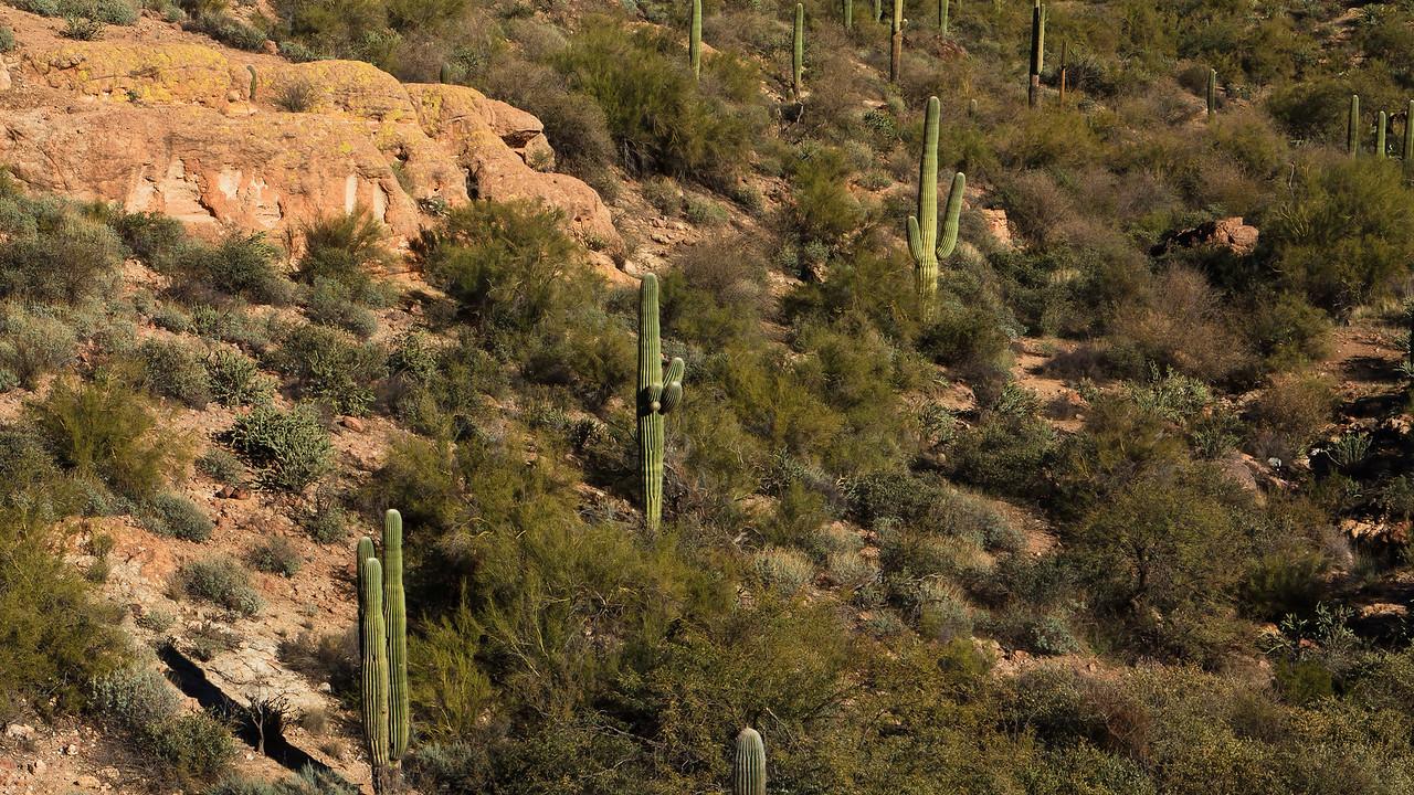 20110113_Arizona_0095