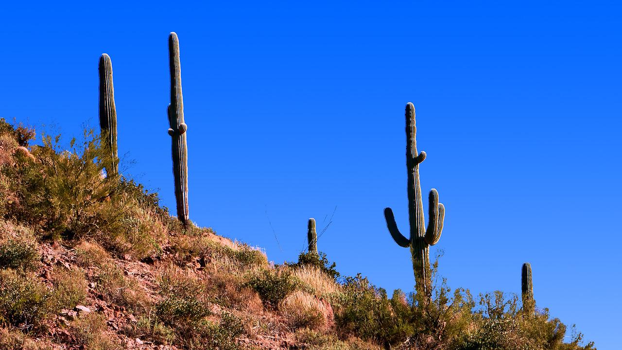 20110113_Arizona_0112