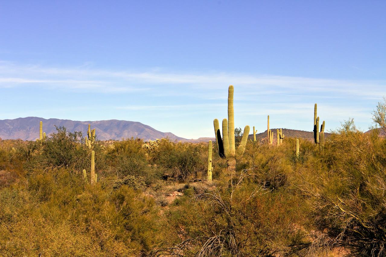 20110113_Arizona_0130