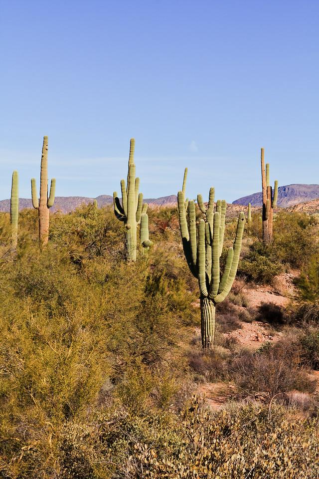 20110113_Arizona_0126