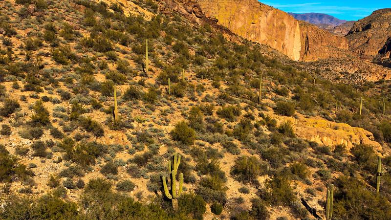 20110113_Arizona_0086