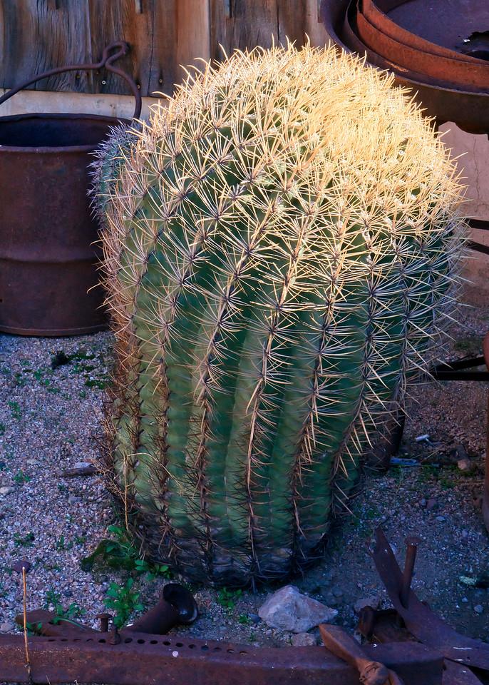 20110113_Arizona_0066