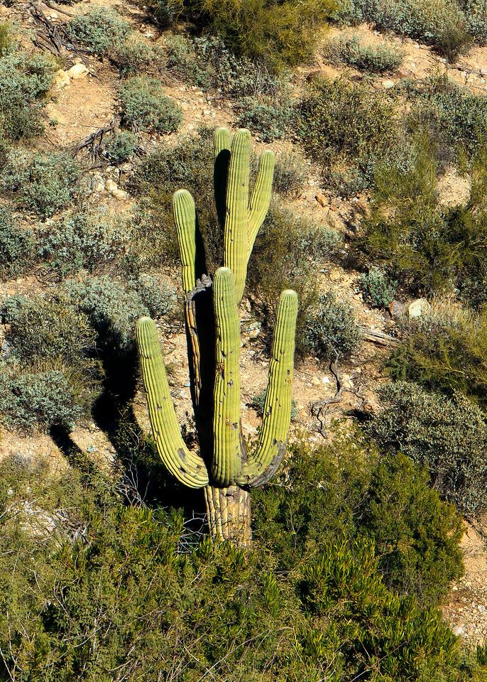 20110113_Arizona_0092