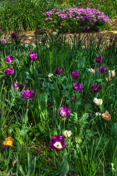 20120324 Atlanta Botanical Gardens -0302_3_4_tonemapped