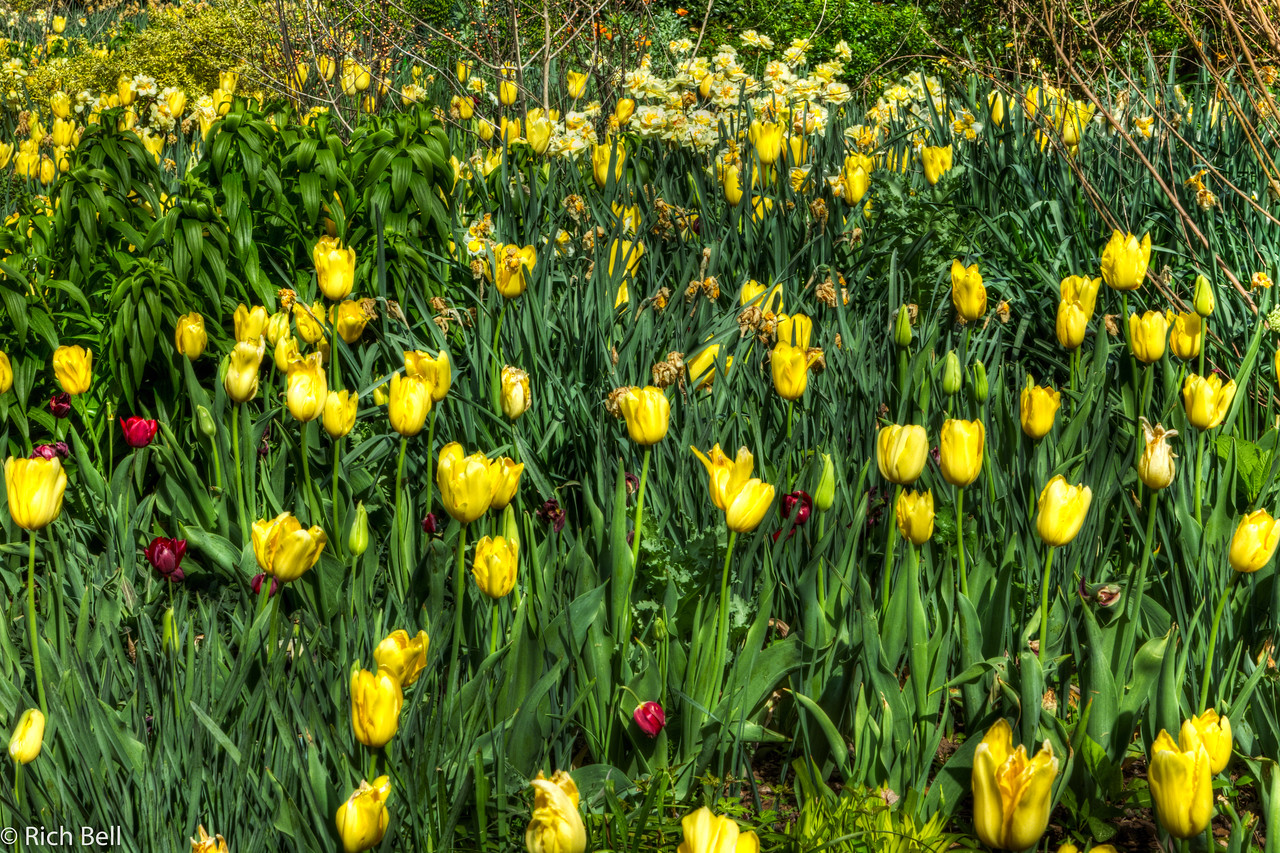 20120324 Atlanta Botanical Gardens -0239_40_41_tonemapped