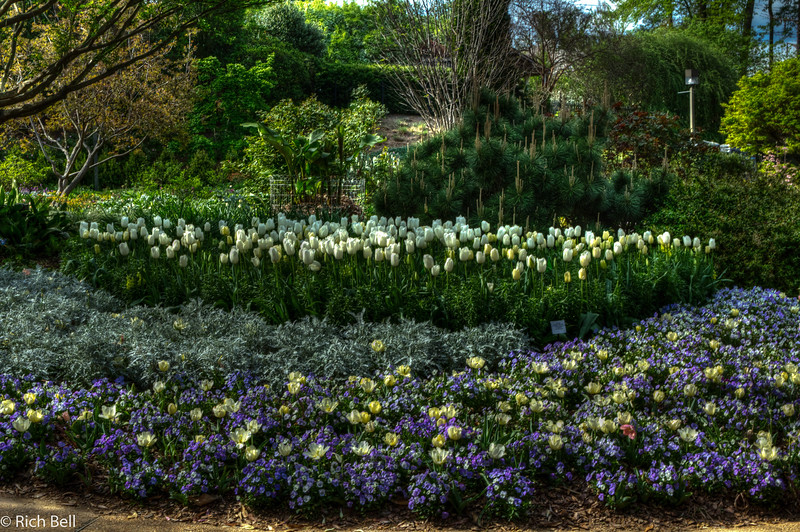 20120324 Atlanta Botanical Gardens -0350_1_2_tonemapped