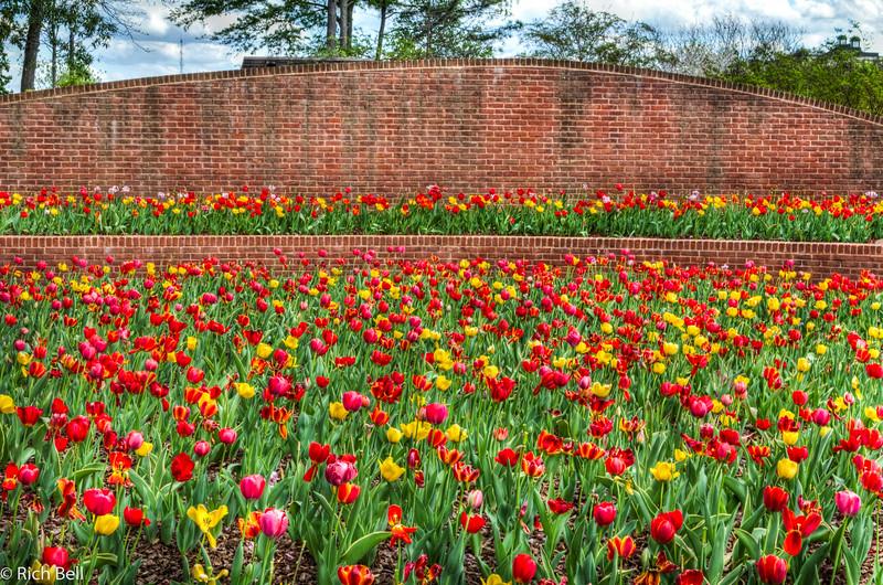 20120324 Atlanta Botanical Gardens -0398_399_400_tonemapped