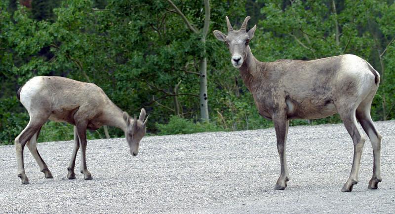 20030809 Banff Canada 0429