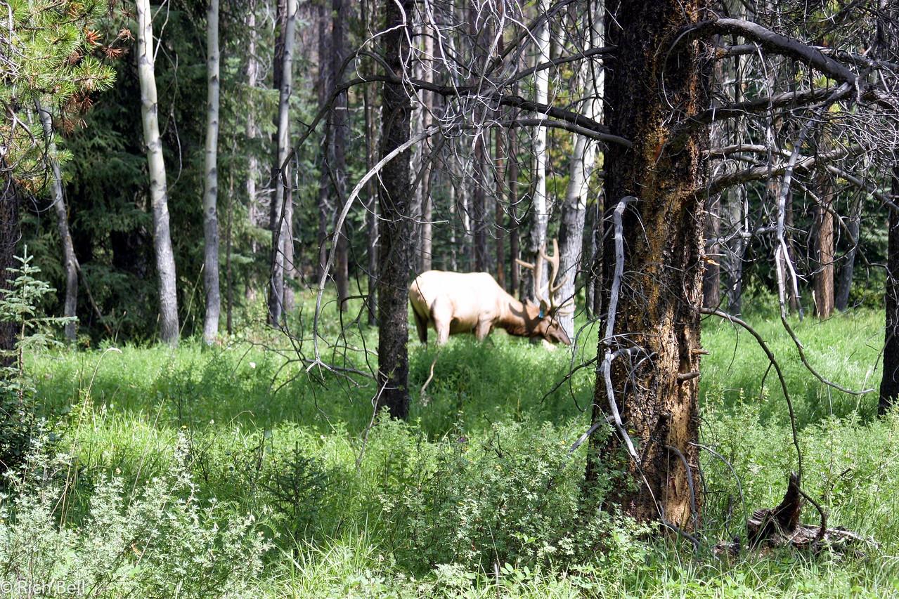20030808 Banff Canada 0361