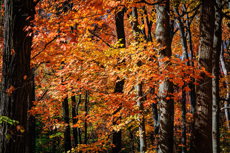 20121021 Brown County -0225
