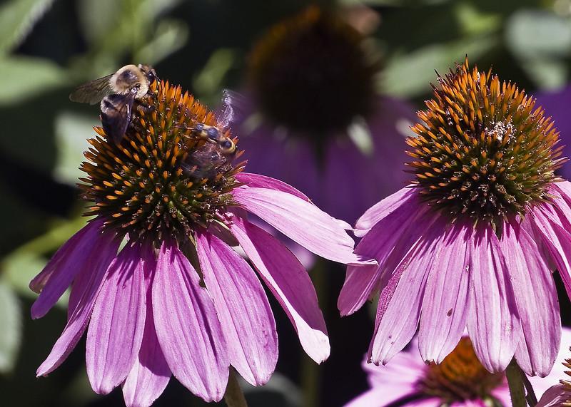 Cleveland Botanical Garden, Ohio 0023