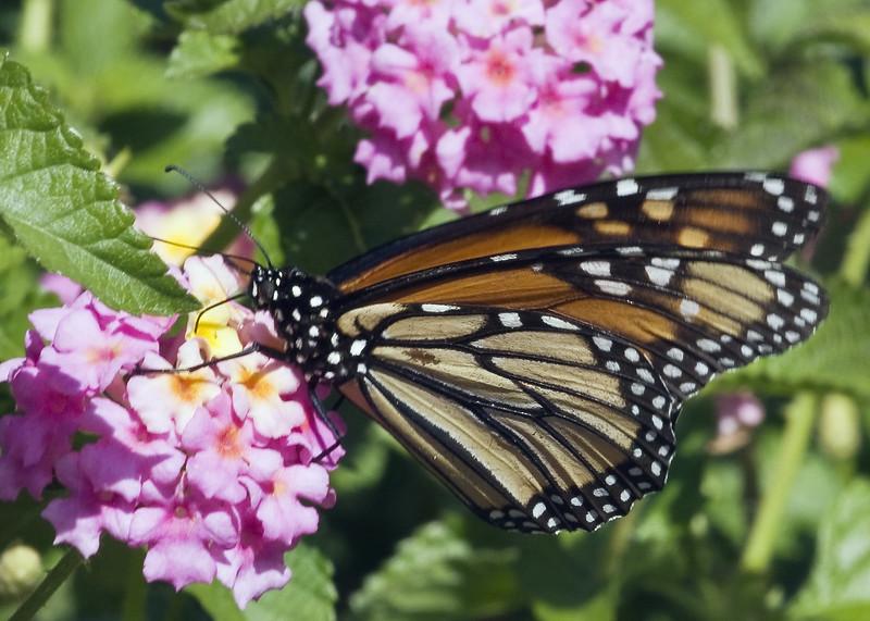 Cleveland Botanical Garden, Ohio 0010