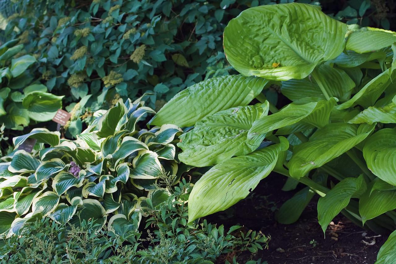 20080816 Cleveland Gardens_0880