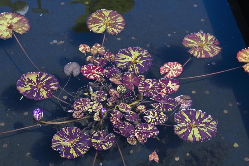 Cleveland Botanical Garden, Ohio 0001