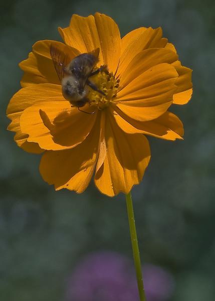 Cleveland Botanical Garden, Ohio 0026