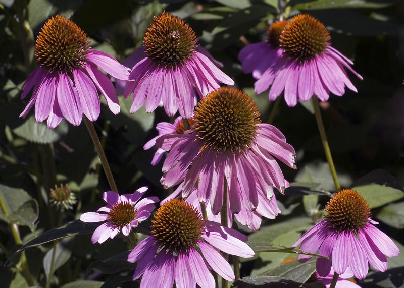 Cleveland Botanical Garden, Ohio 0022