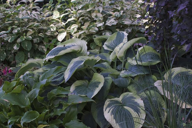Cleveland Botanical Garden, Ohio 0014