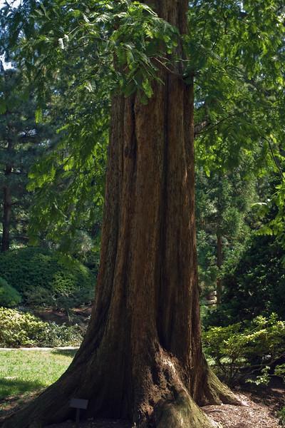 Cleveland Botanical Garden, Ohio 0037