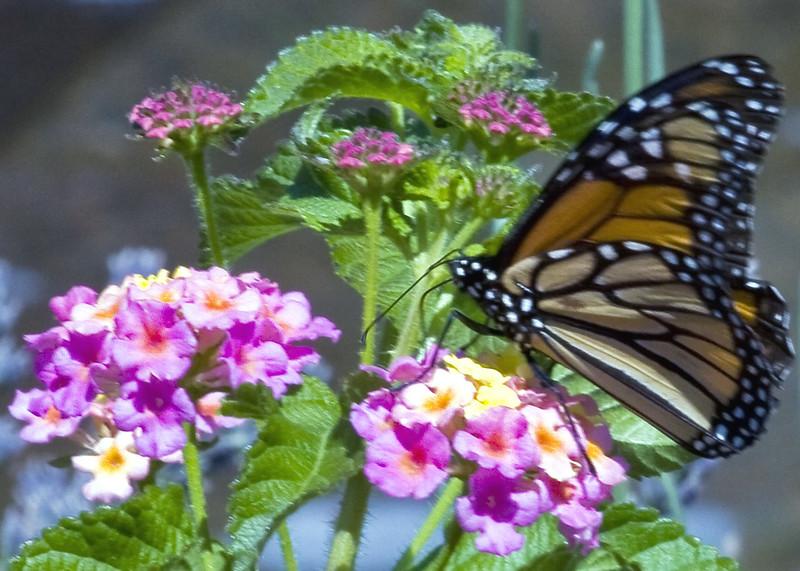 Cleveland Botanical Garden, Ohio 0009