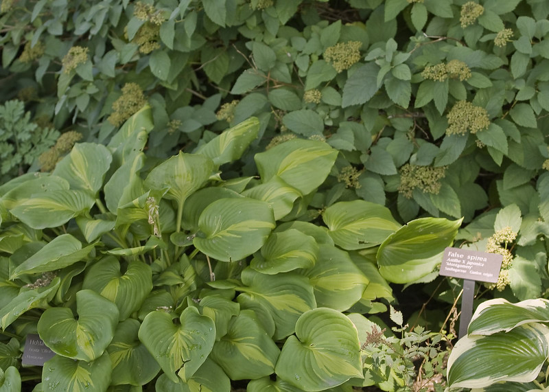 Cleveland Botanical Garden, Ohio 0015