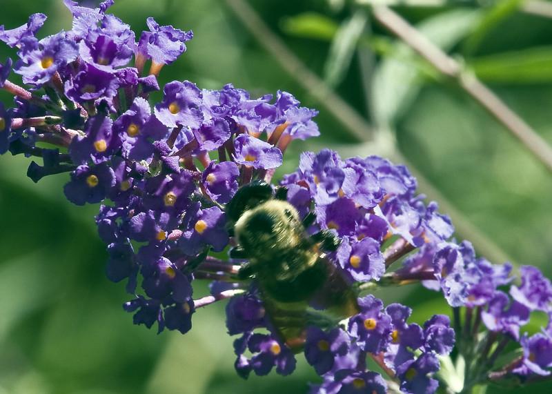 Cleveland Botanical Garden, Ohio 0030