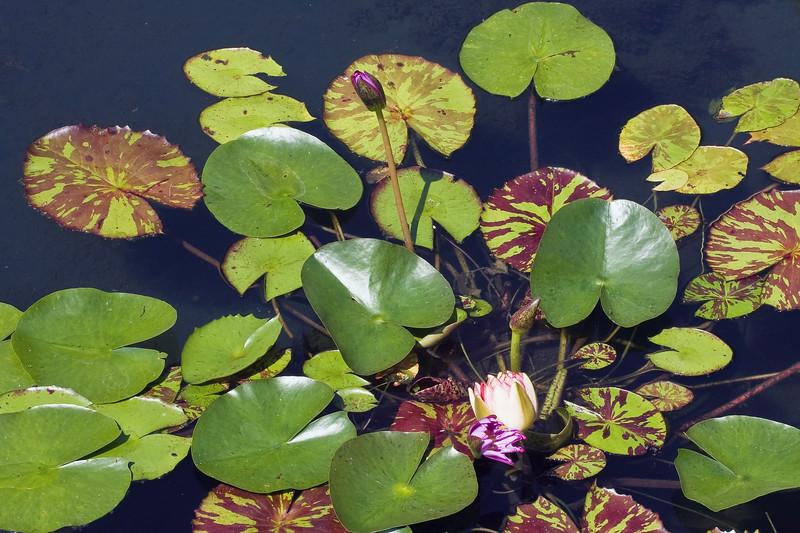 Cleveland Botanical Garden, Ohio 0008