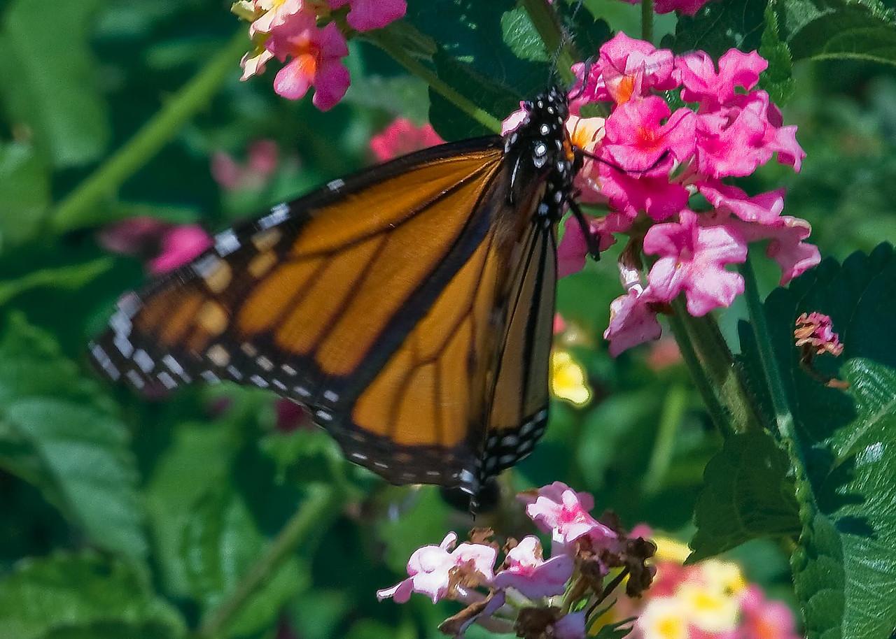 20080816 Cleveland Gardens_0873