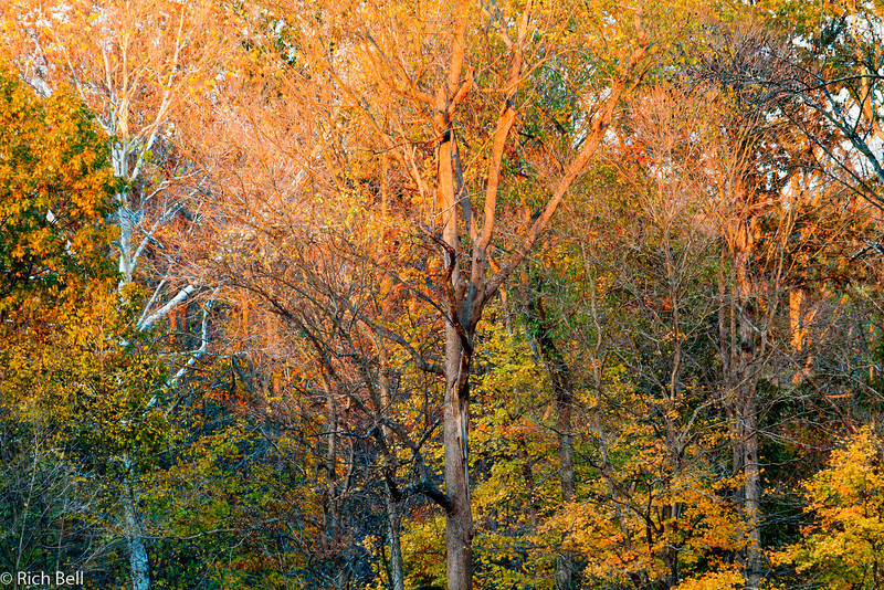 20111023 Covered Bridge  0244-Edit