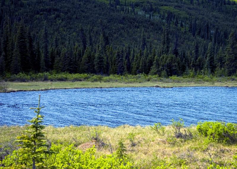 Denali National Park, Alaska 0028