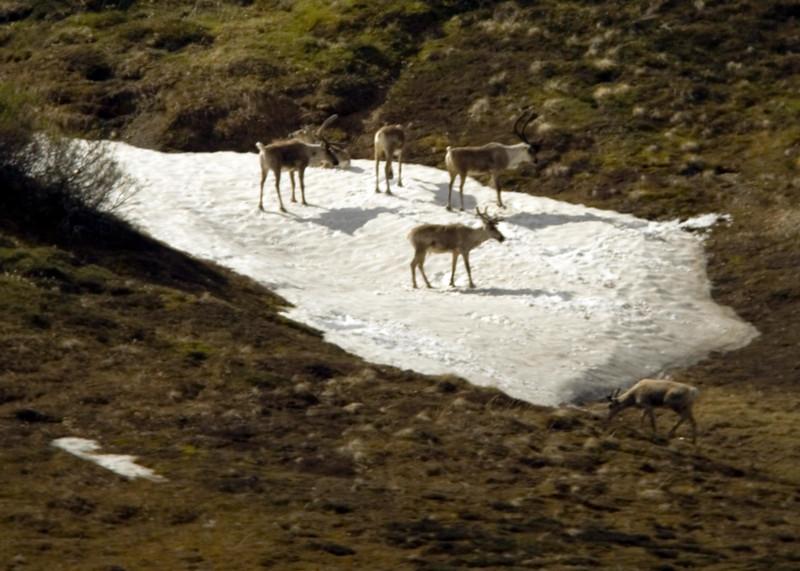 Denali National Park, Alaska 0011