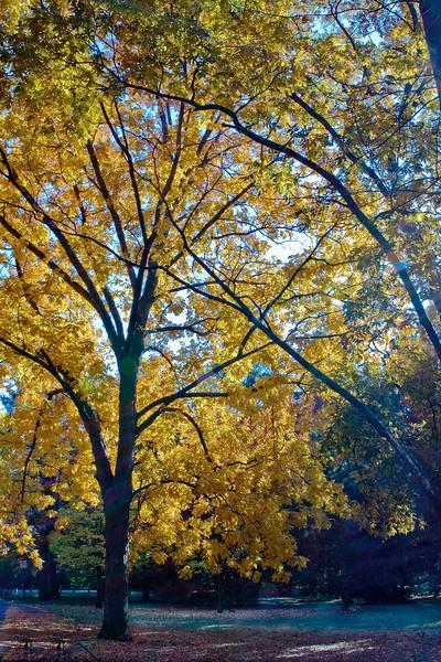 Indiana Fall 0013