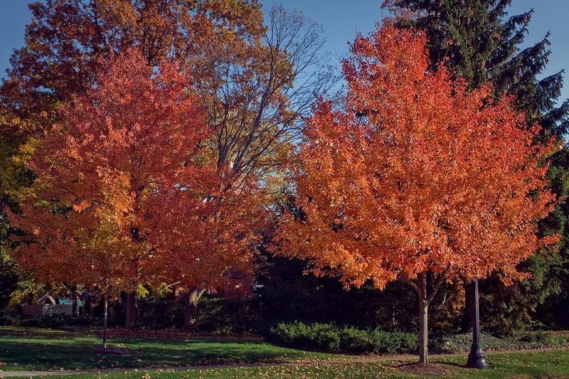 Indiana Fall 0020