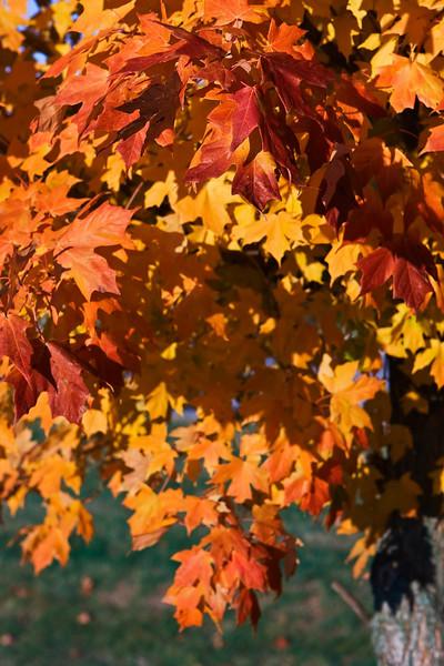 Indiana Fall 0025