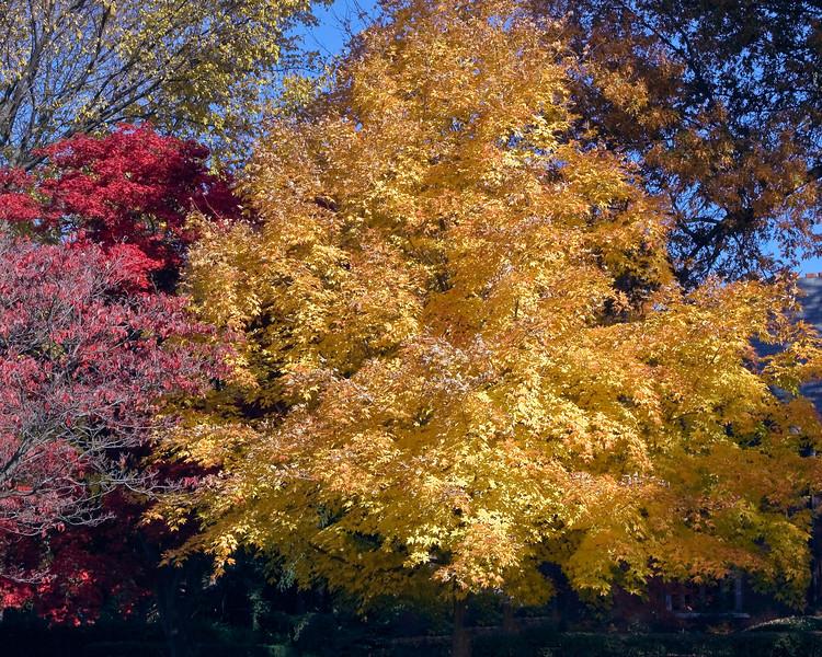 Indiana Fall 0016