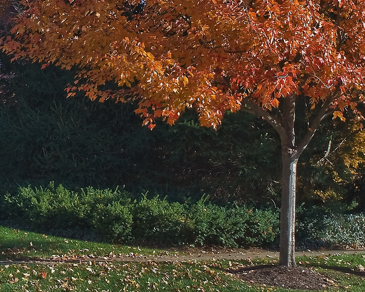Indiana Fall 0019