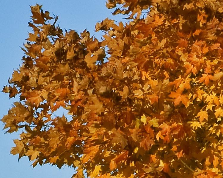 Indiana Fall 0024