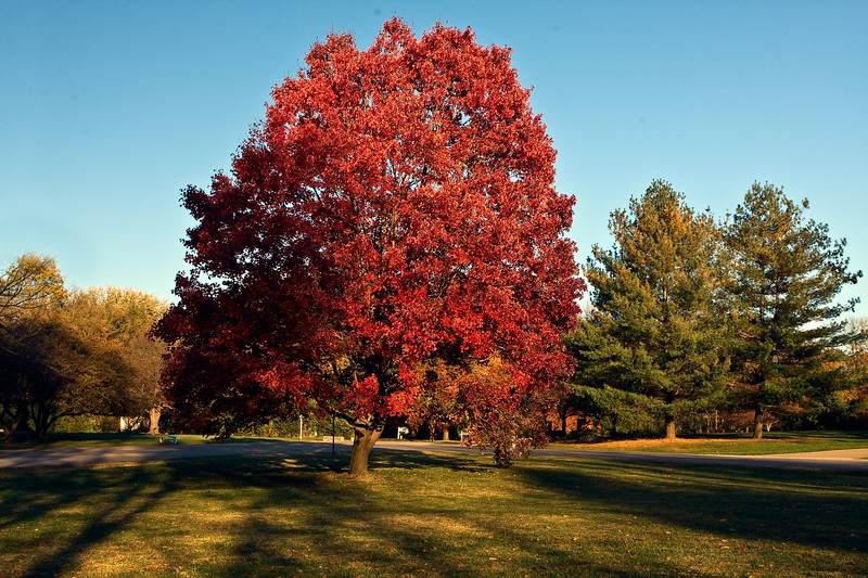 Indiana Fall 0022